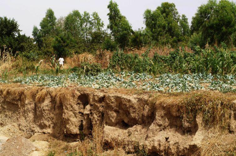 Gestione e conservazione d'acqua e suoli per la resilienza degli agricoltori di Mogtedo, Burkina Faso