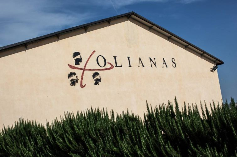 WiForWine per Azienda Agricola Olianas, Gergei (CA)