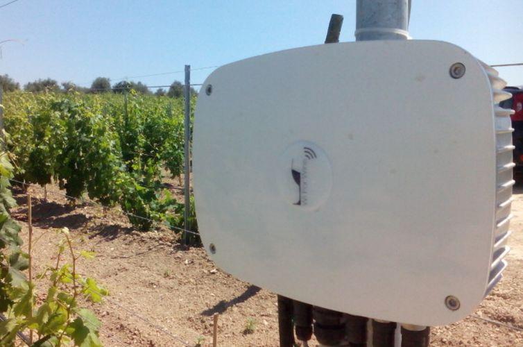WiForWine per Azienda Carpante, Usini (SS)