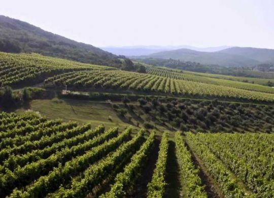 vinakoper-susgrape-progetto